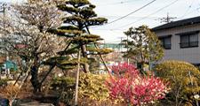 山門側庭園